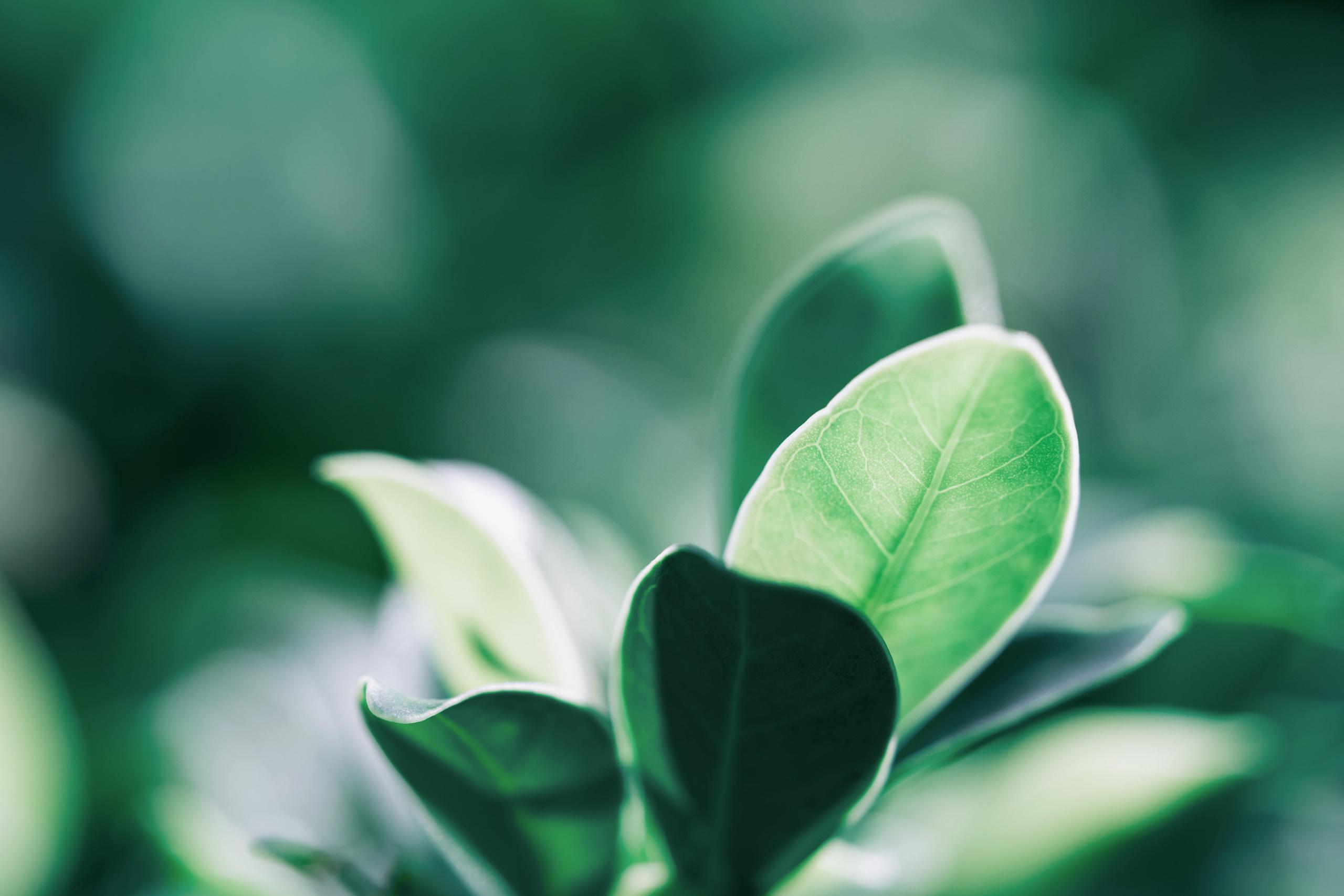 lehdet vihreällä taustalla