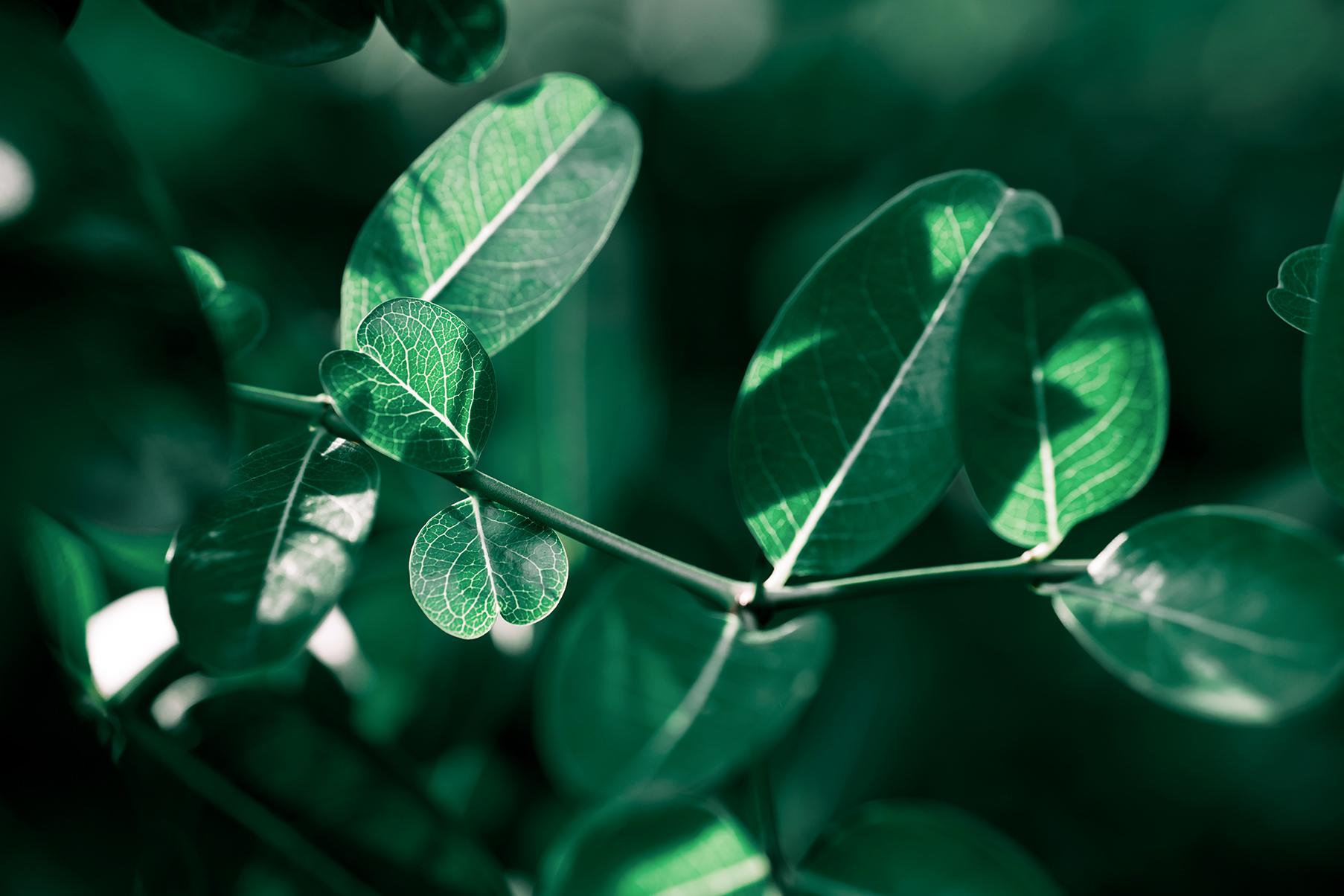 vihreät lehdet